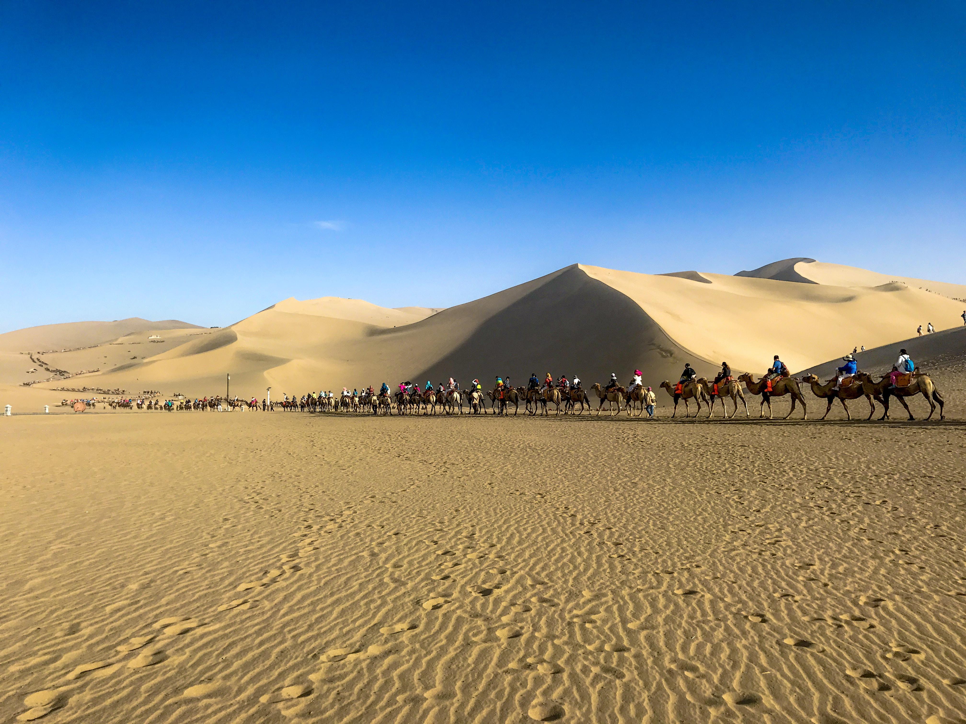 people riding camel at desert during daytime