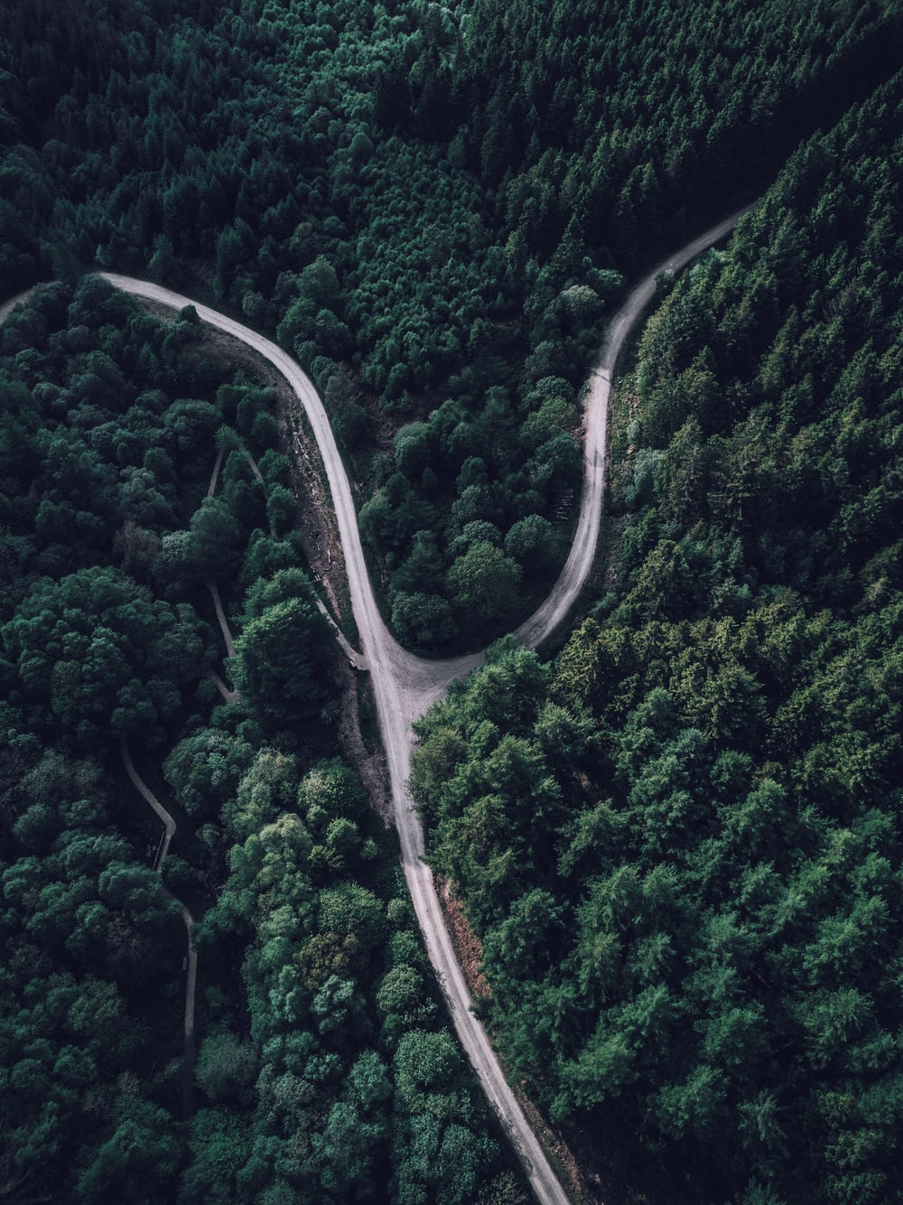 top view photography of forest
