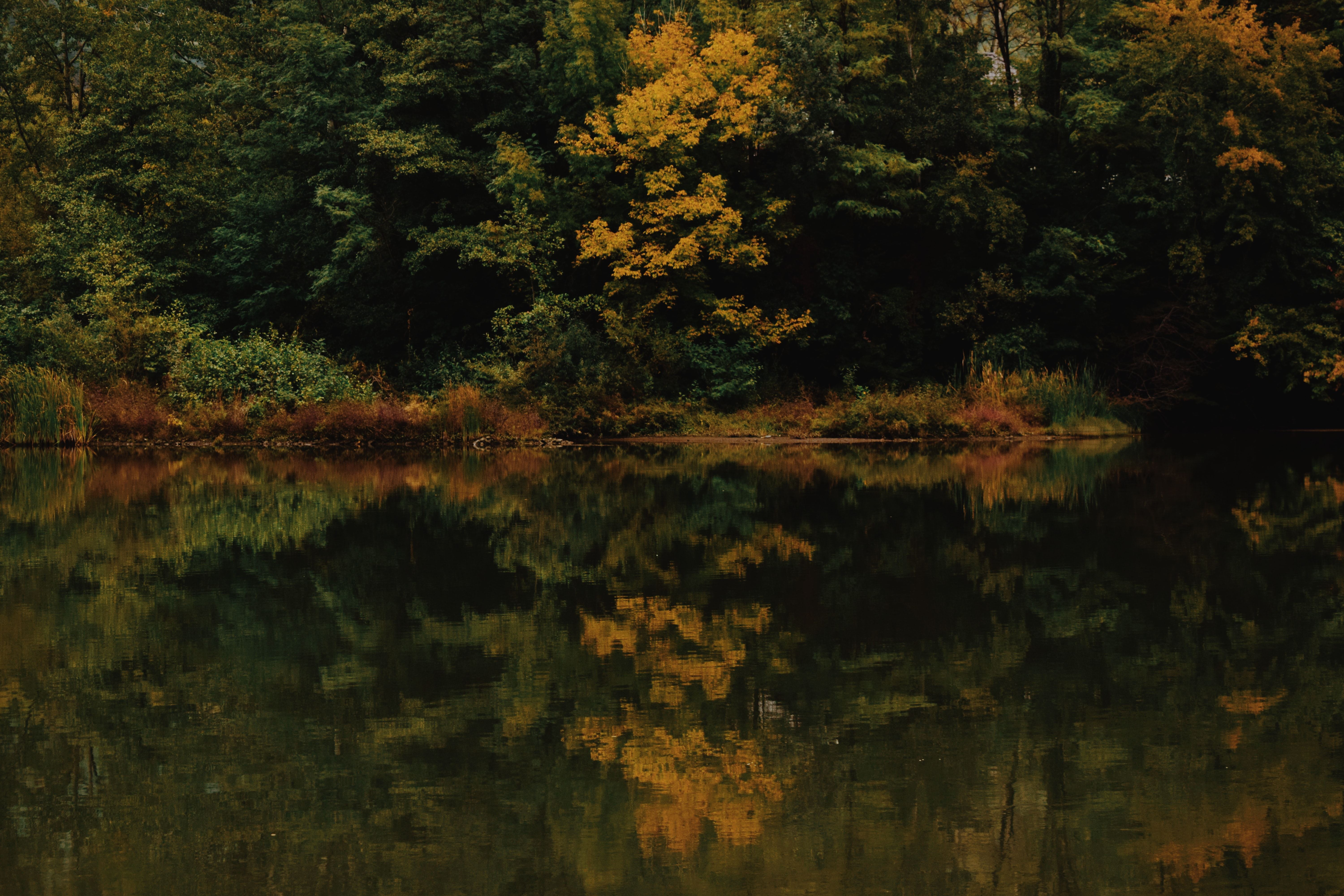 yellow and green forest landscape