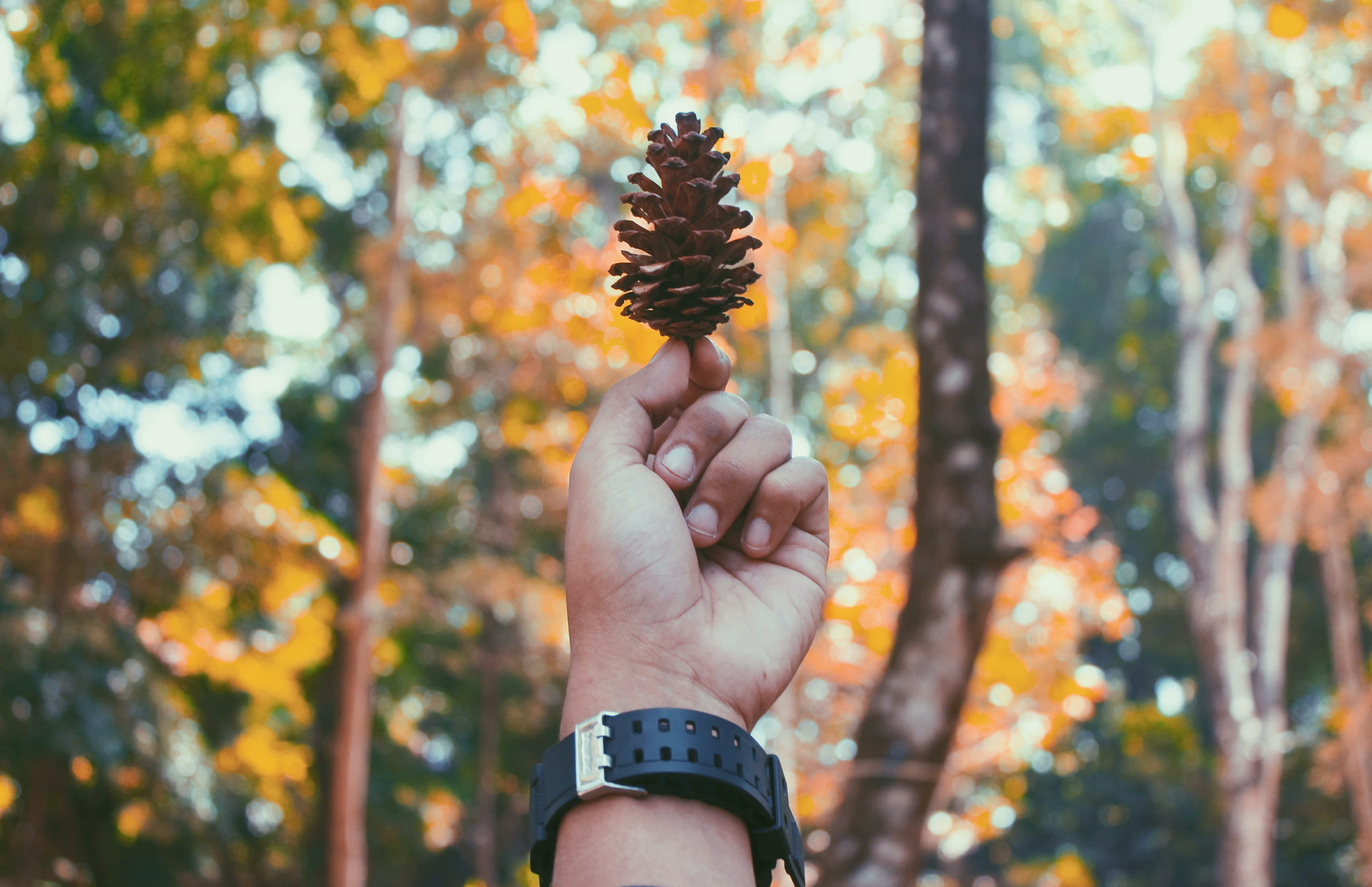 selective focus photography of person holding bronw pine cone