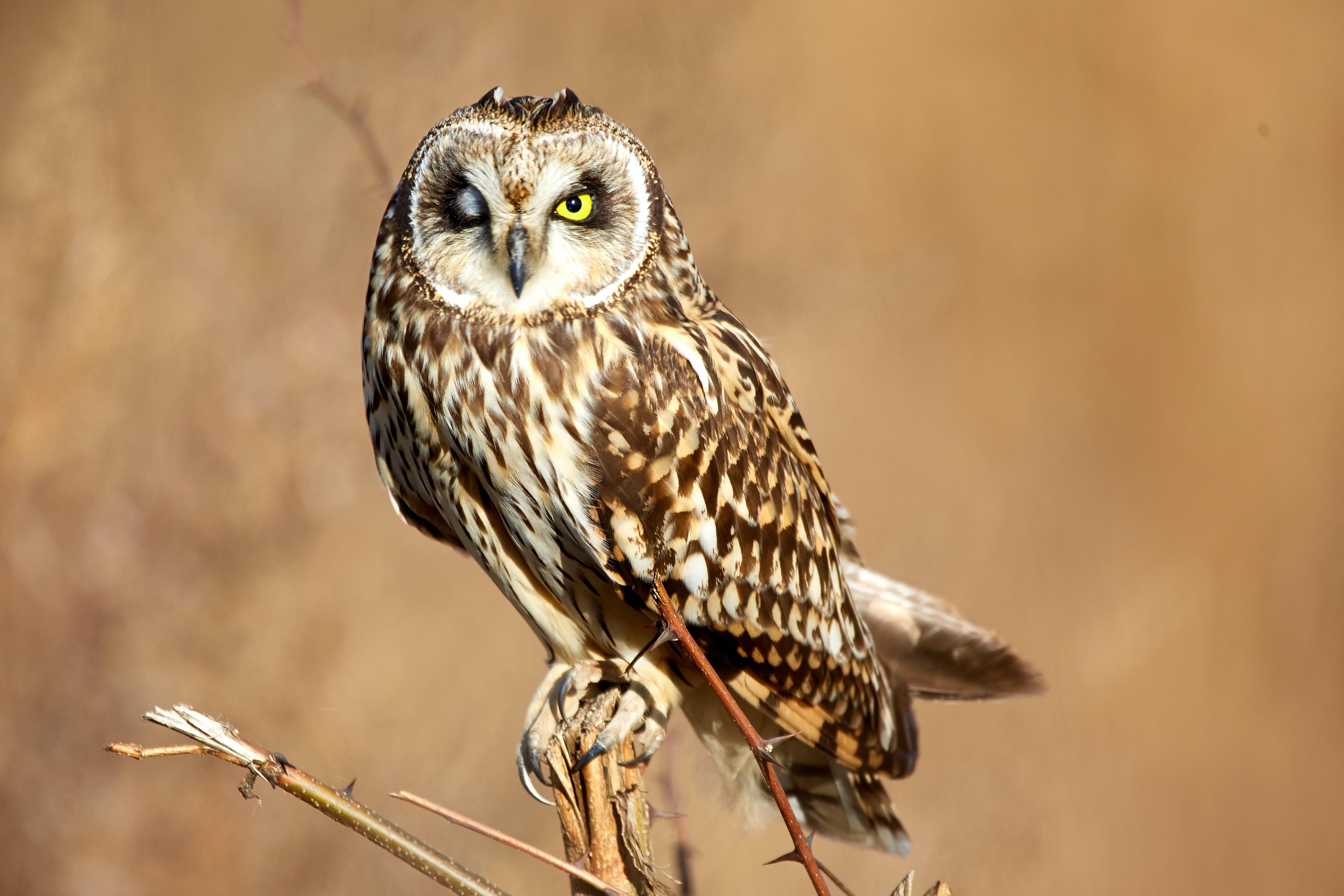 tilt-shift lens photography of brown owl during daytime