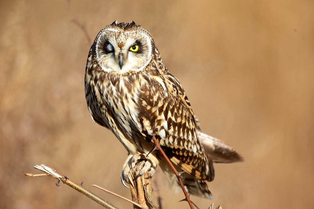 tilt-shift lens photography of brown owl during daytime