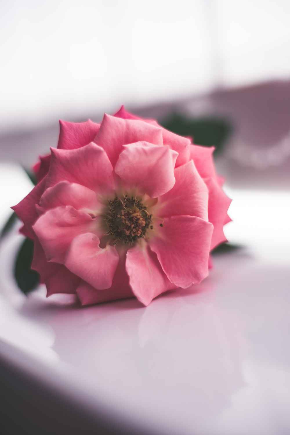 Pink Lady 29 Best Free Pink Minimal Flower And Background