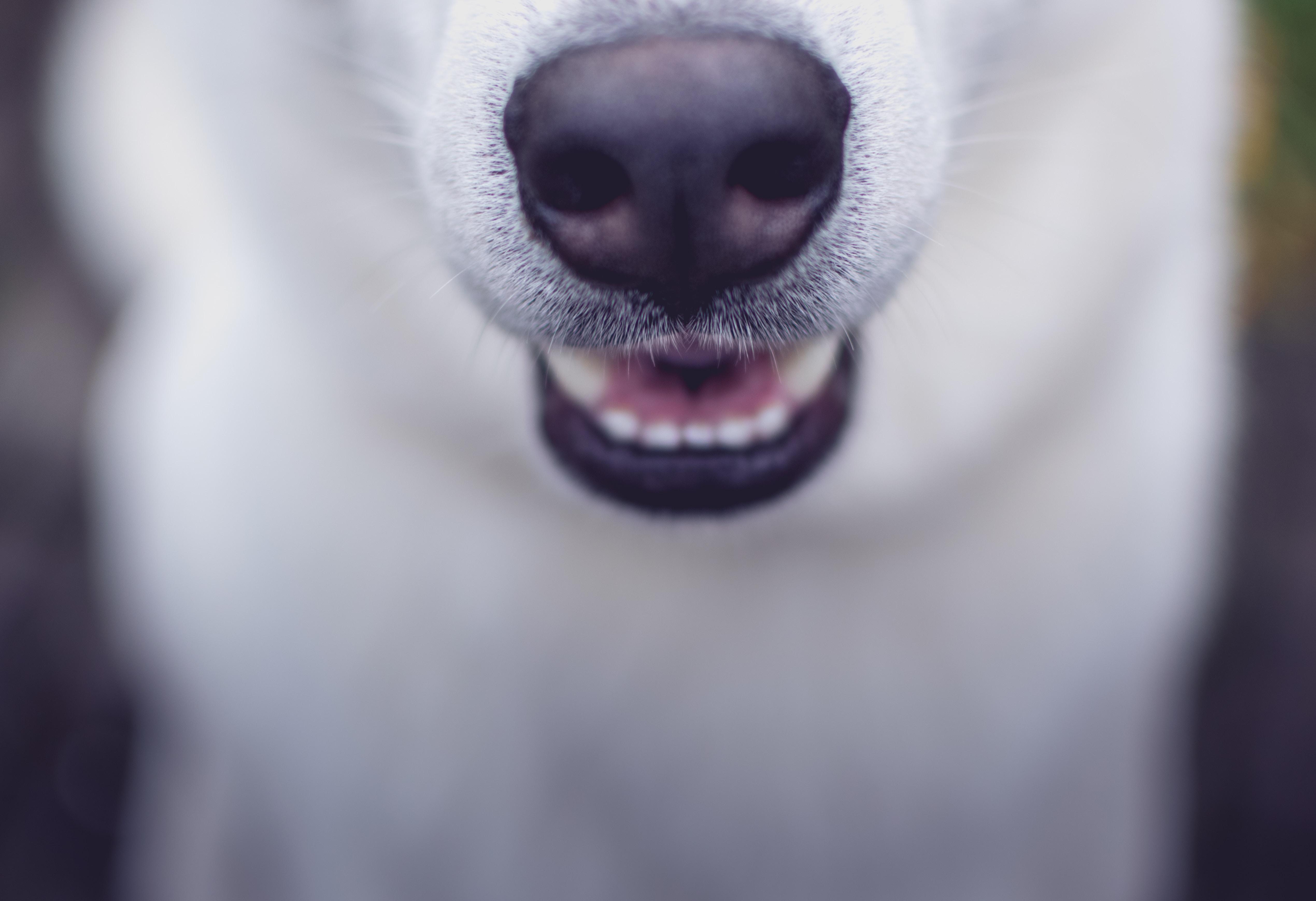 selective focus photo of white dog