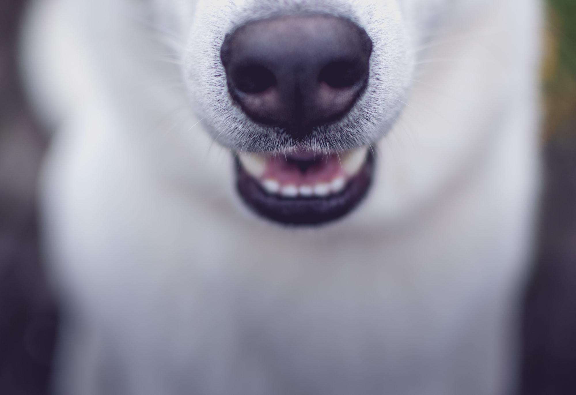 Собака охраняла гладіолуси