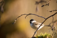 shallow focus photography of white bird on tree branch during daytime