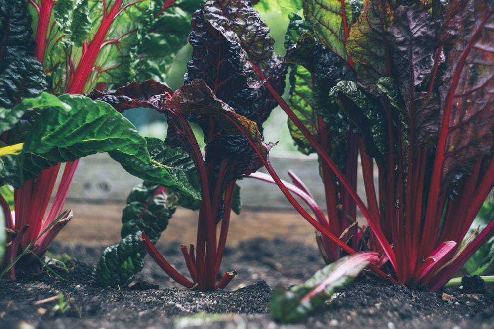 How To Make Your Own  Veggie Garden