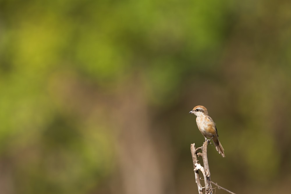 shallow depth of field photography brown bird perching on twig