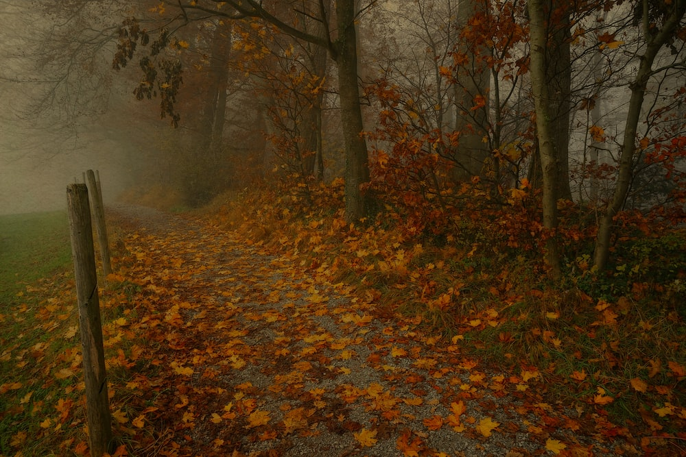 withered leaves on dirt road during daytime