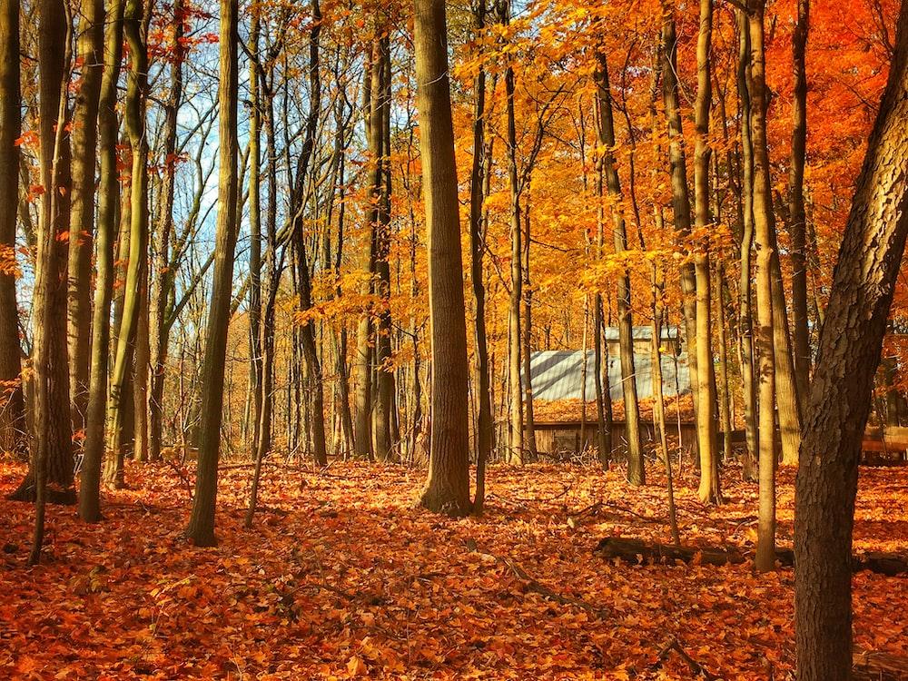 orange dried leaves near trees