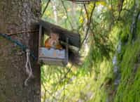 Your Land is My Land - Red VS Gray squirrel stories