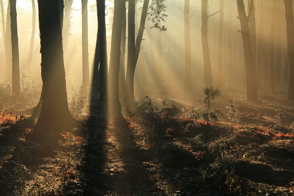 green trees on forest with sunray
