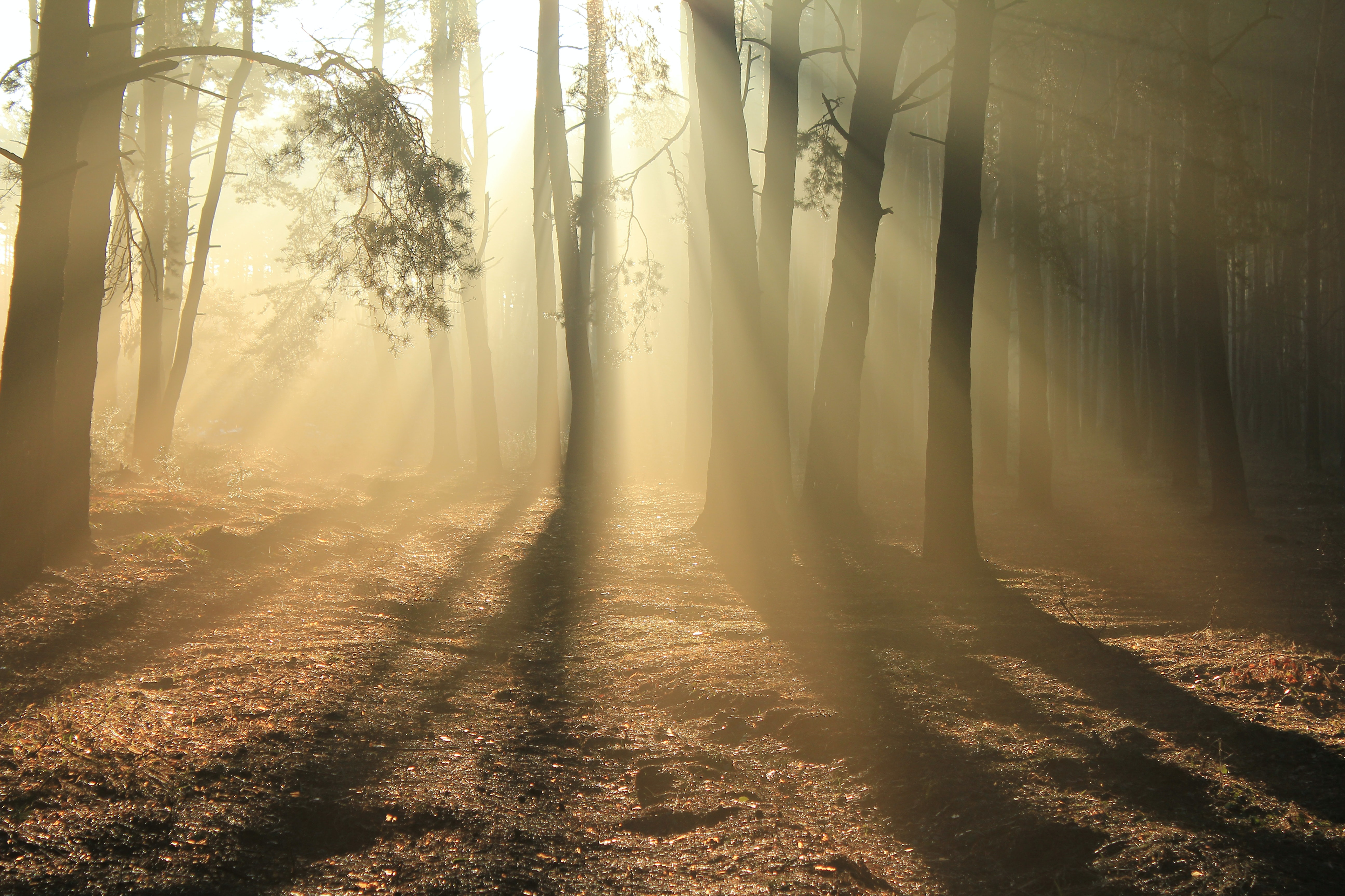 golden hour photography of forest trees