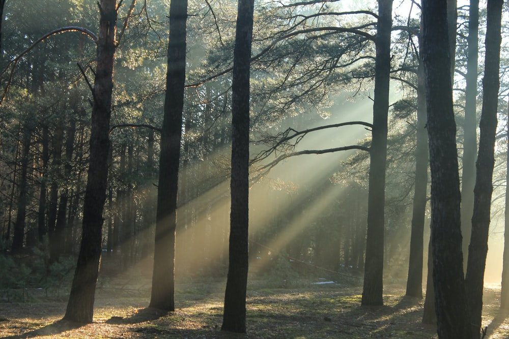 forest at daytime