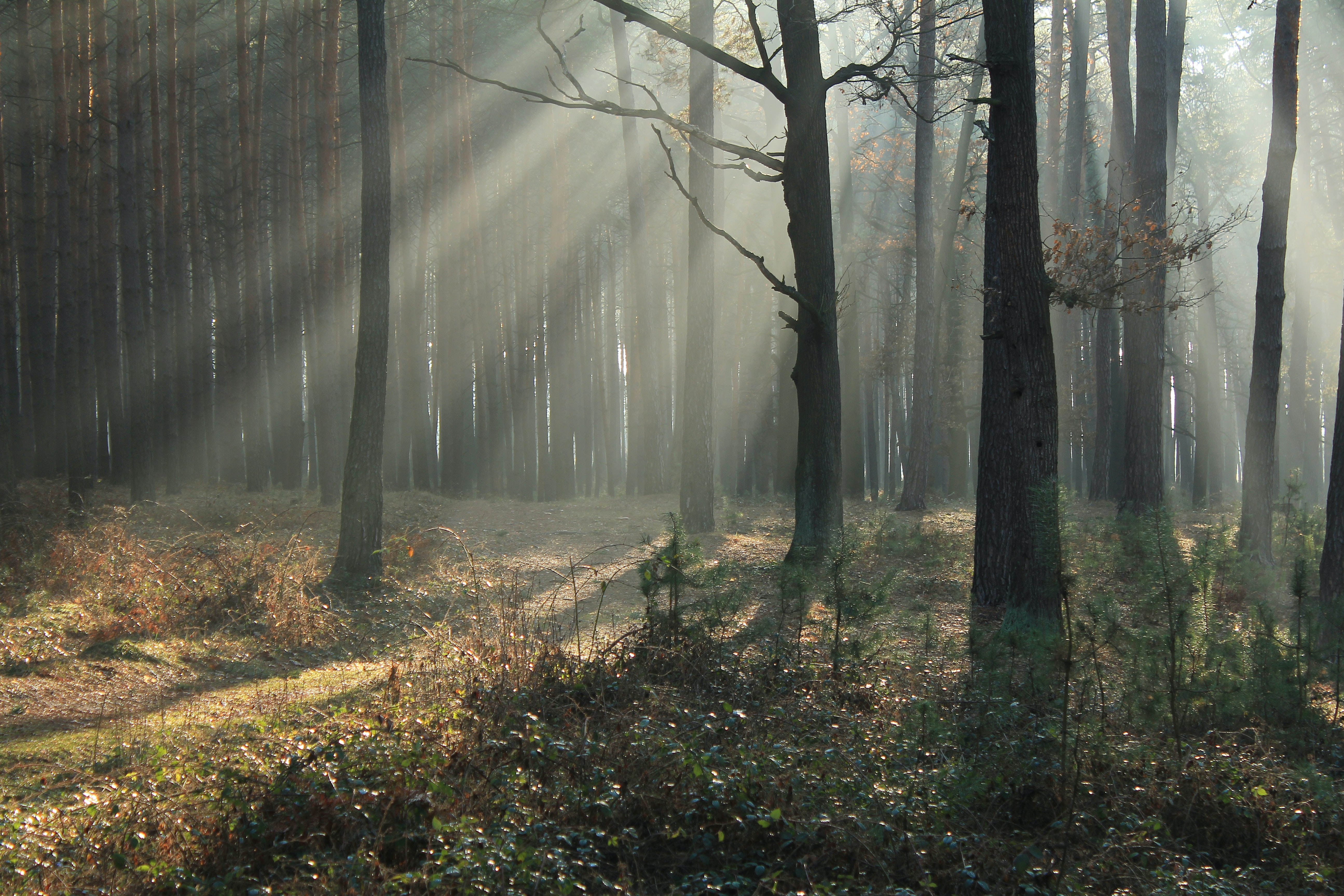 foggy forest full of trees