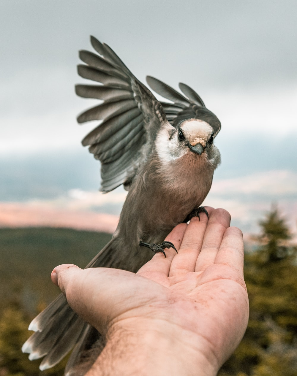 gray bird perched on person's hand