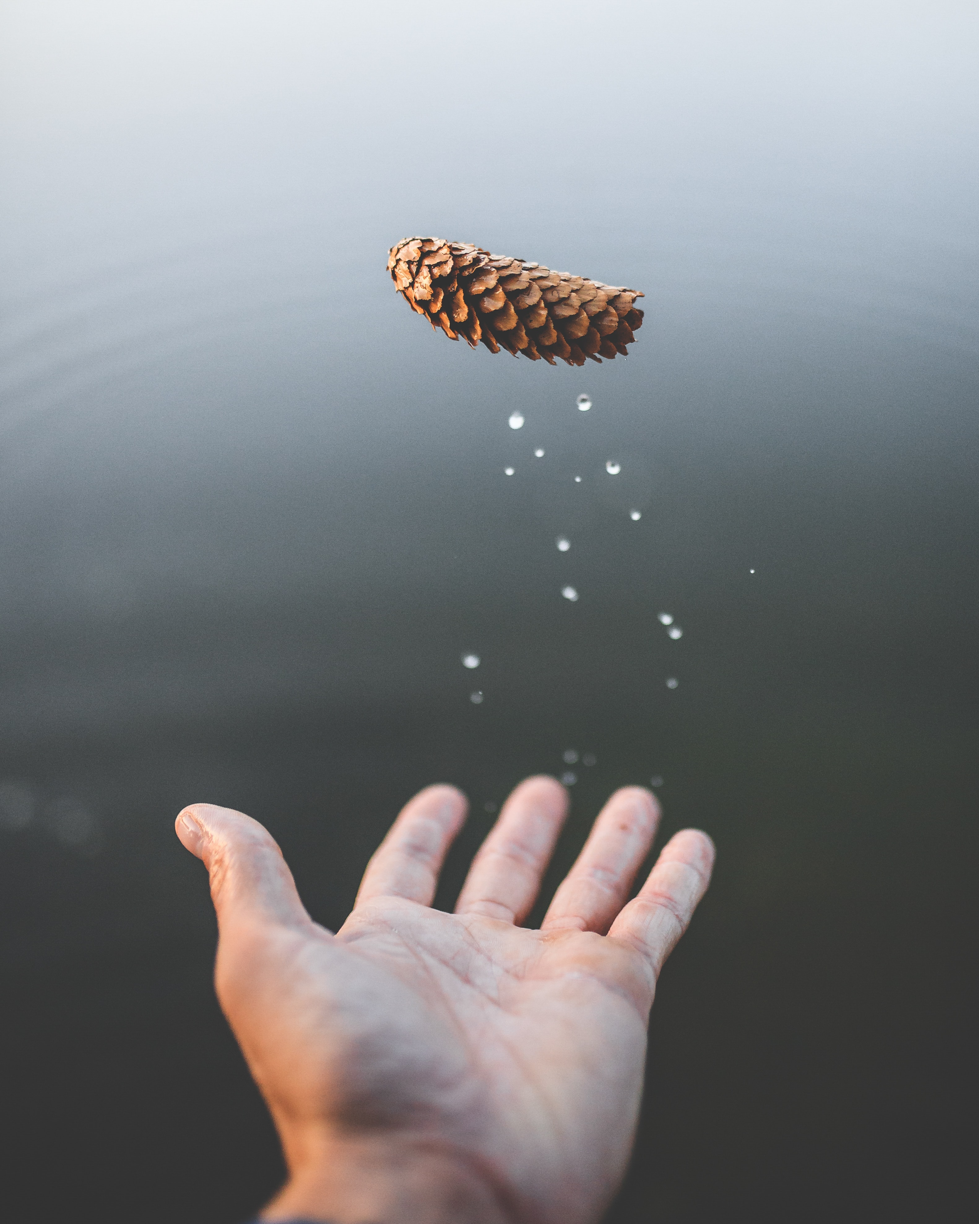 man throwing brown pine cone