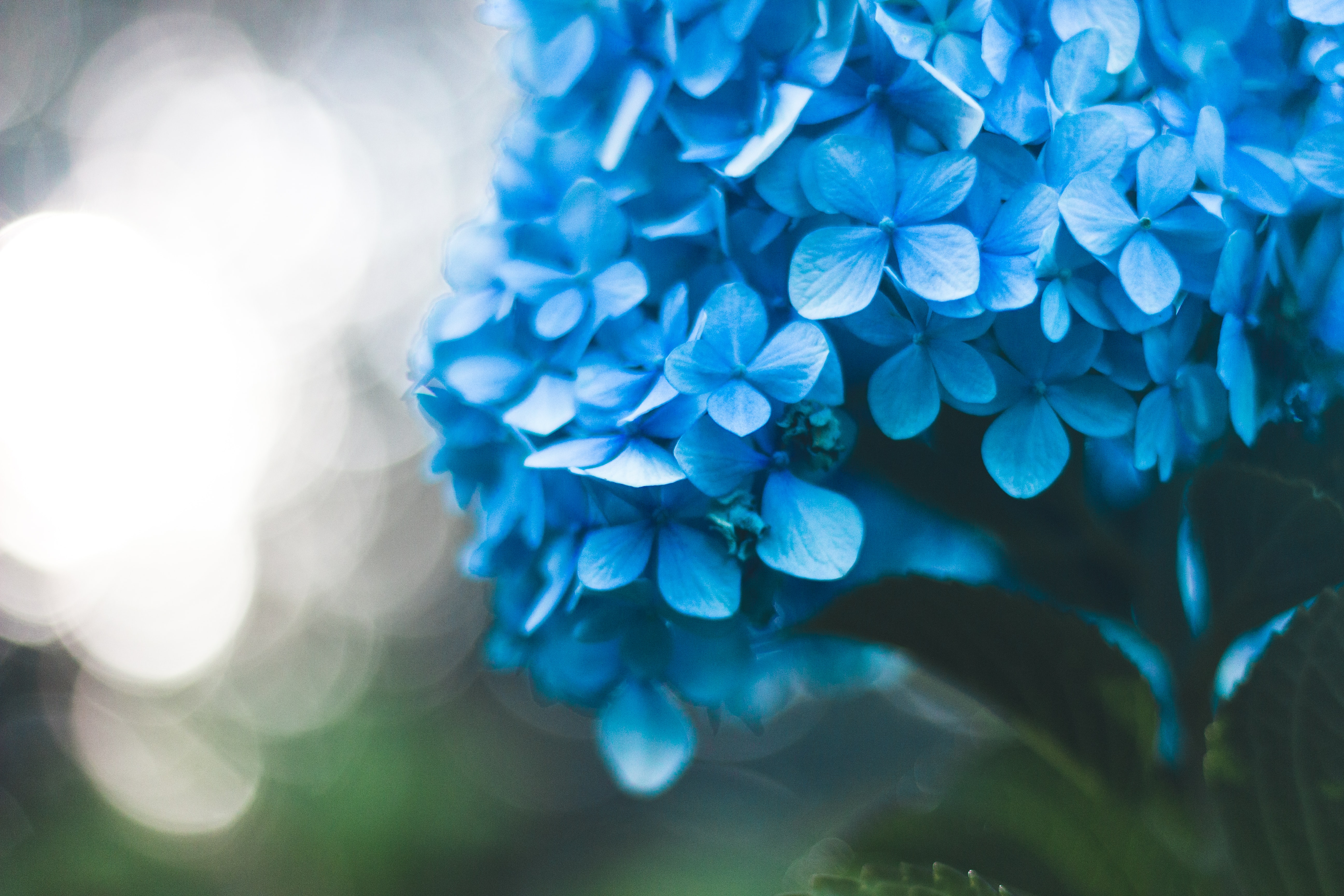 close up photography of blue petaled flower