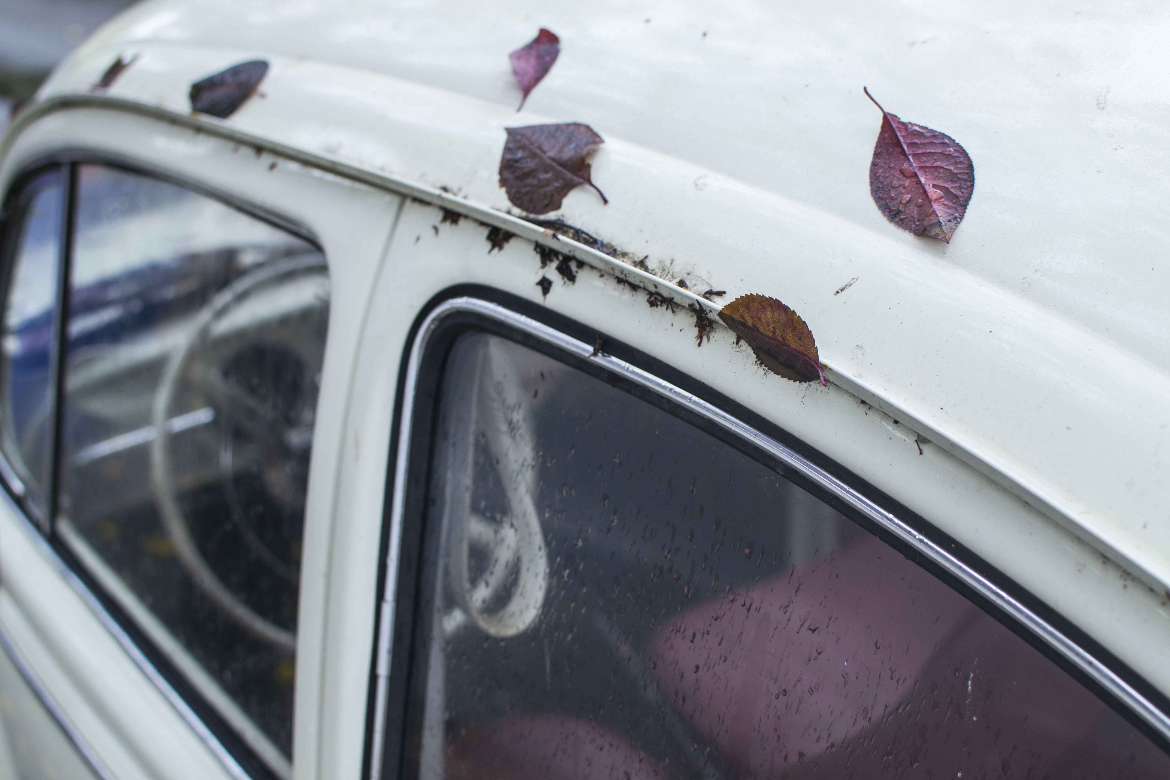 red leaves on white car roof