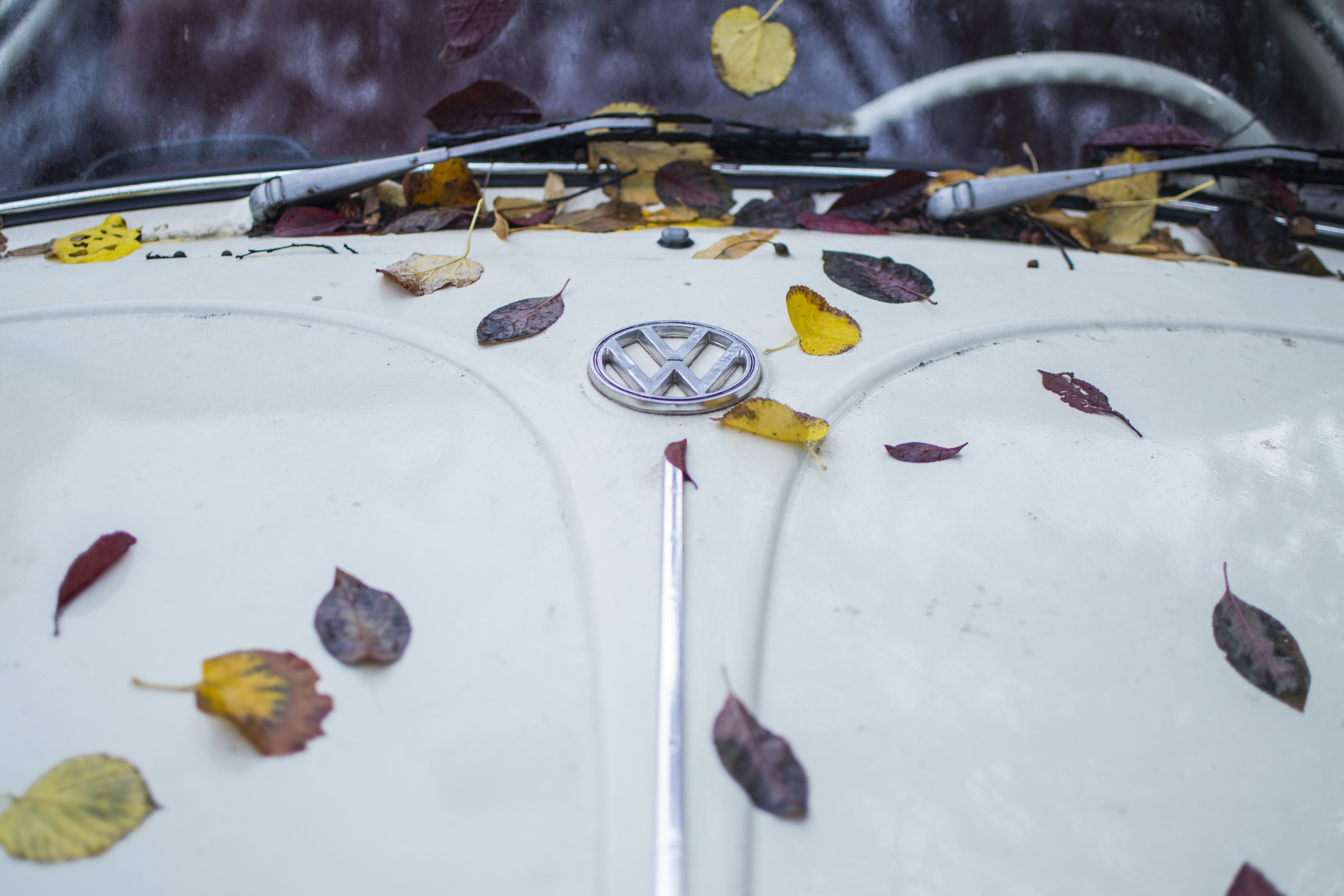 close up photo of white Volkswagen car