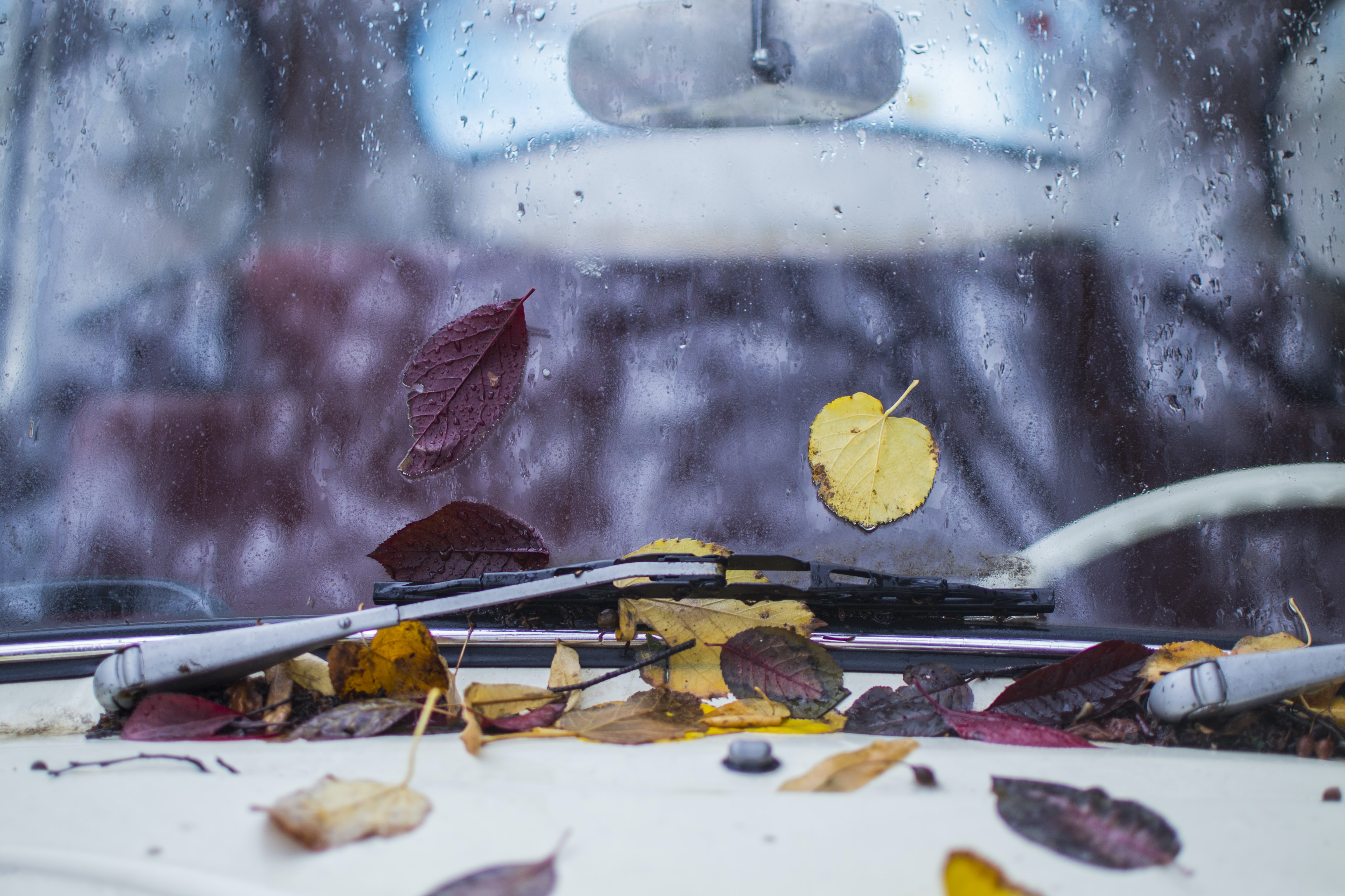 withered leaves pile into vehicle windshield