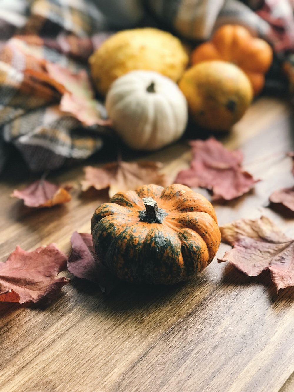 selective focus photography of ]pumpkin