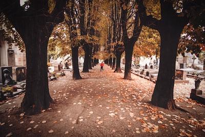 trees beside concrete road