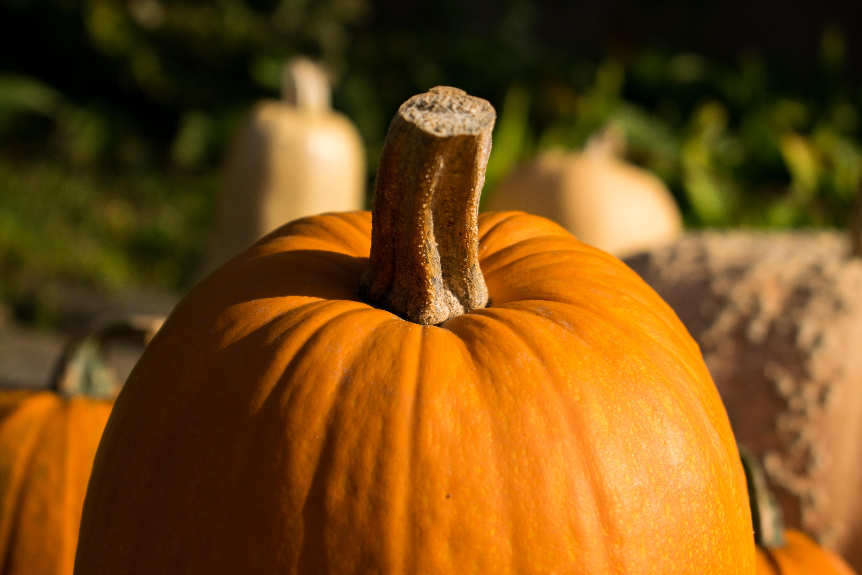 close up photo of pumpkin
