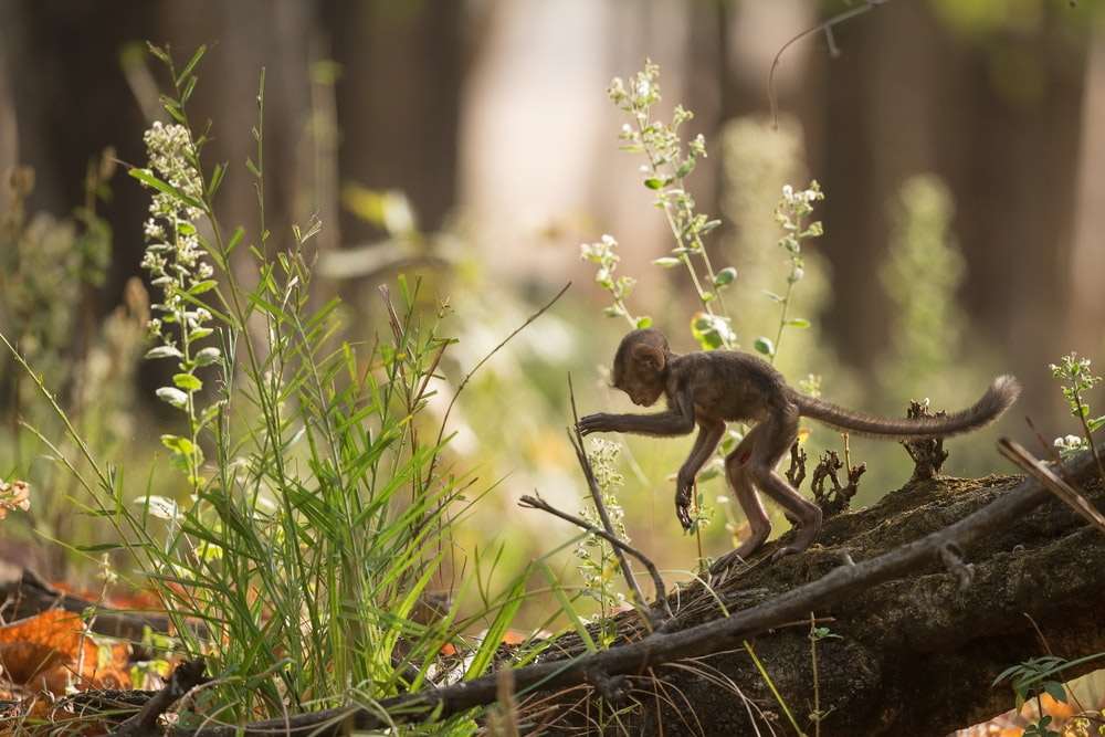monkey standing on tree beside petaled flowers