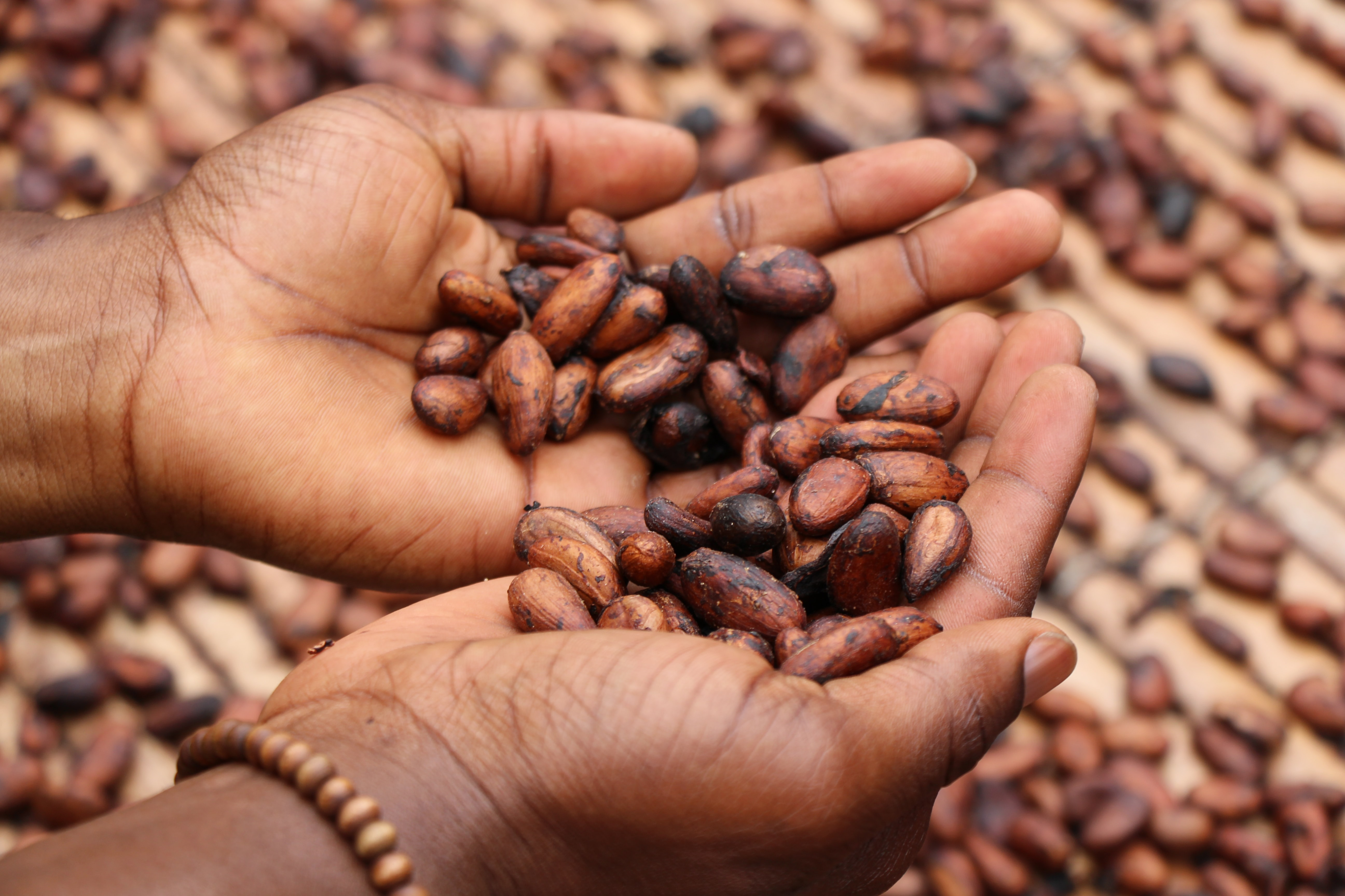 person holding brown and black seeds