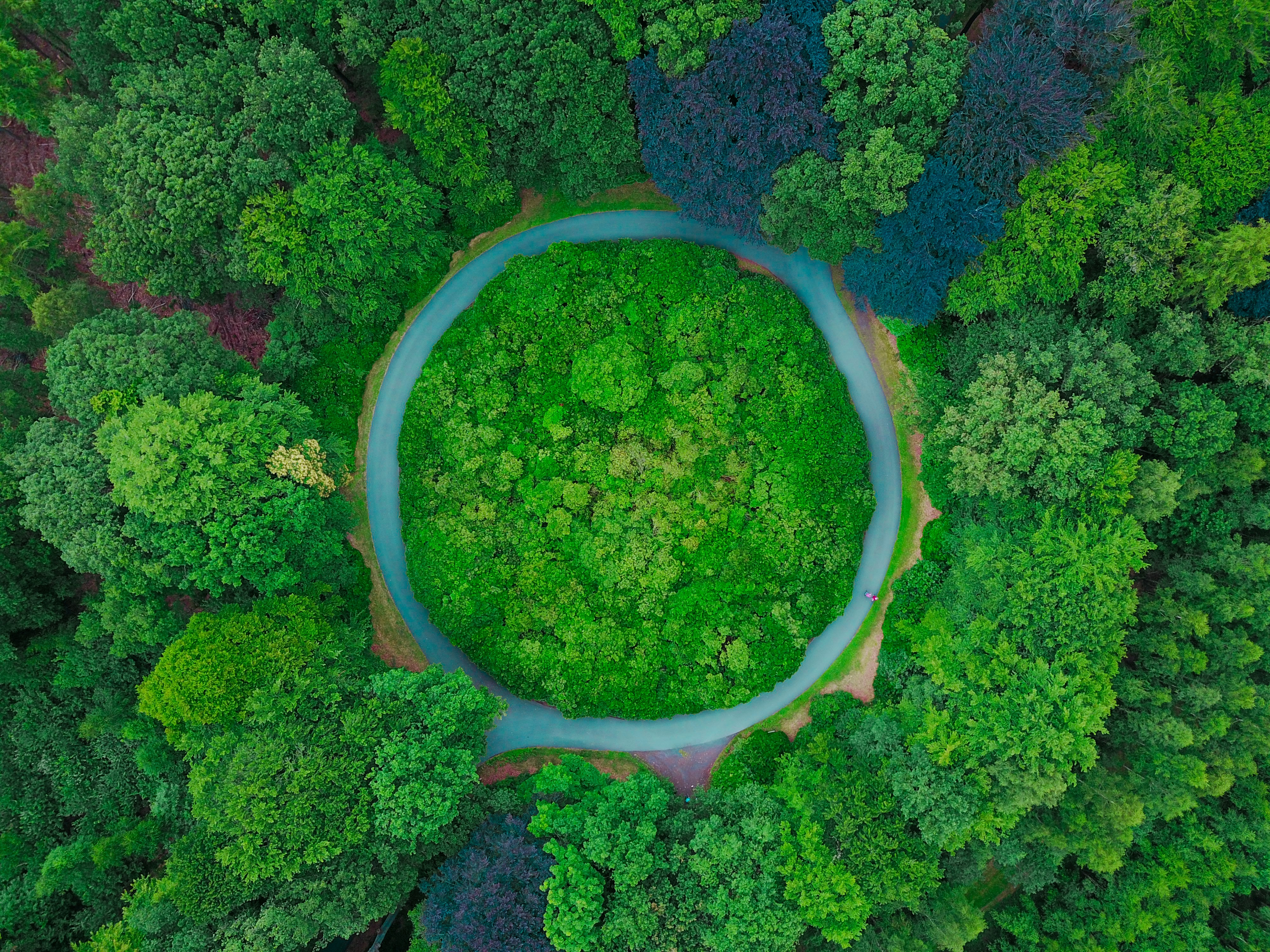 aerial photography of tall green trees at daytime