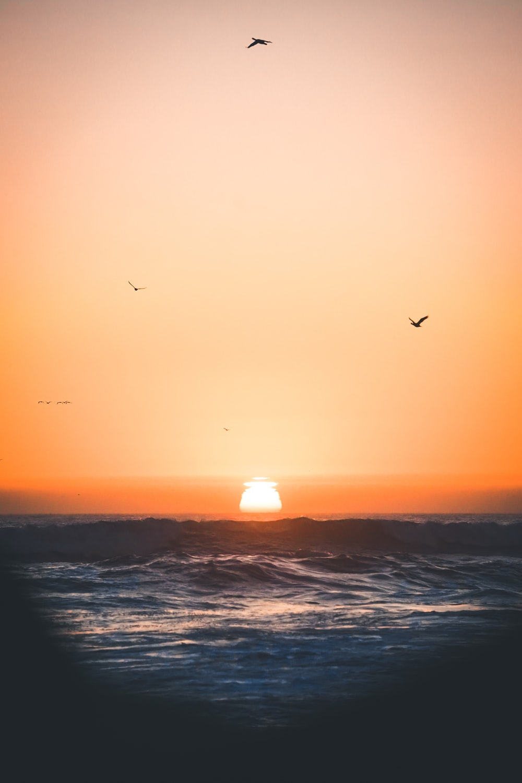 silhouette of birds flying above ocean during sunset