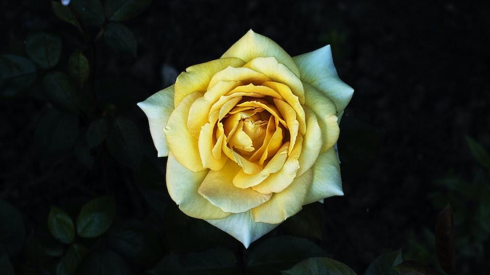 macro photography of yellow petaled flower