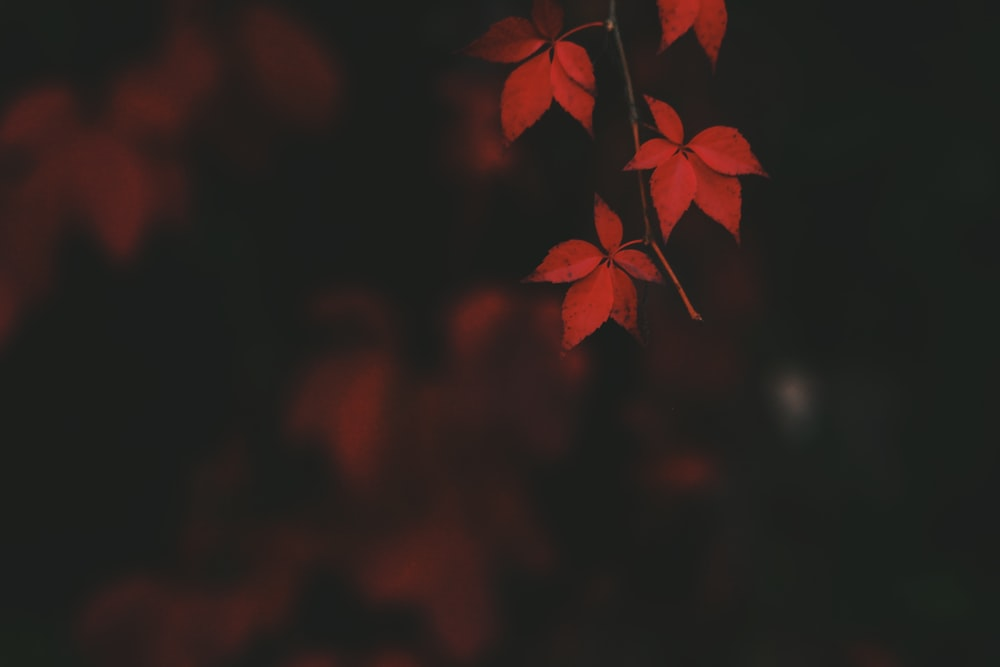 Download These Colorful Fall Wallpapers Featuring Photos With Red Orange And Yellow Leaves Falling These Hd Fall Wallpapers Are Free To Download For Your