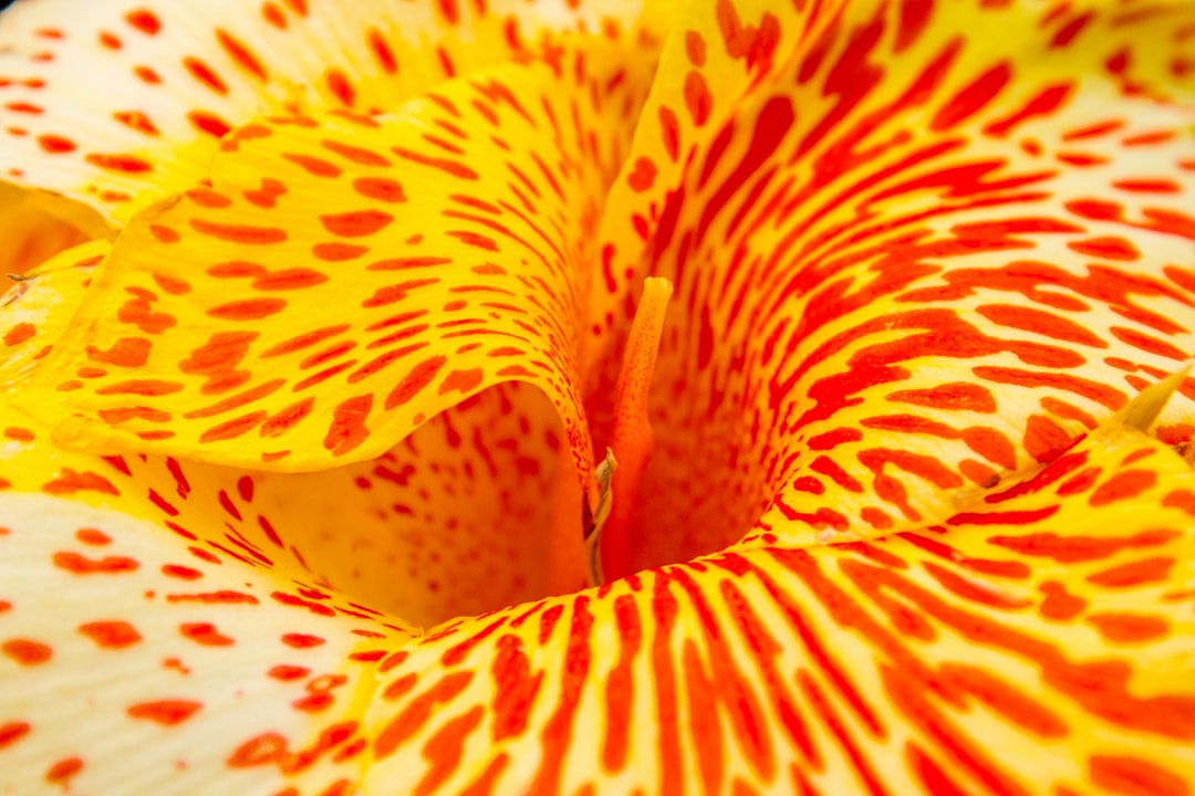 Wonder how it is to live inside of a flower?