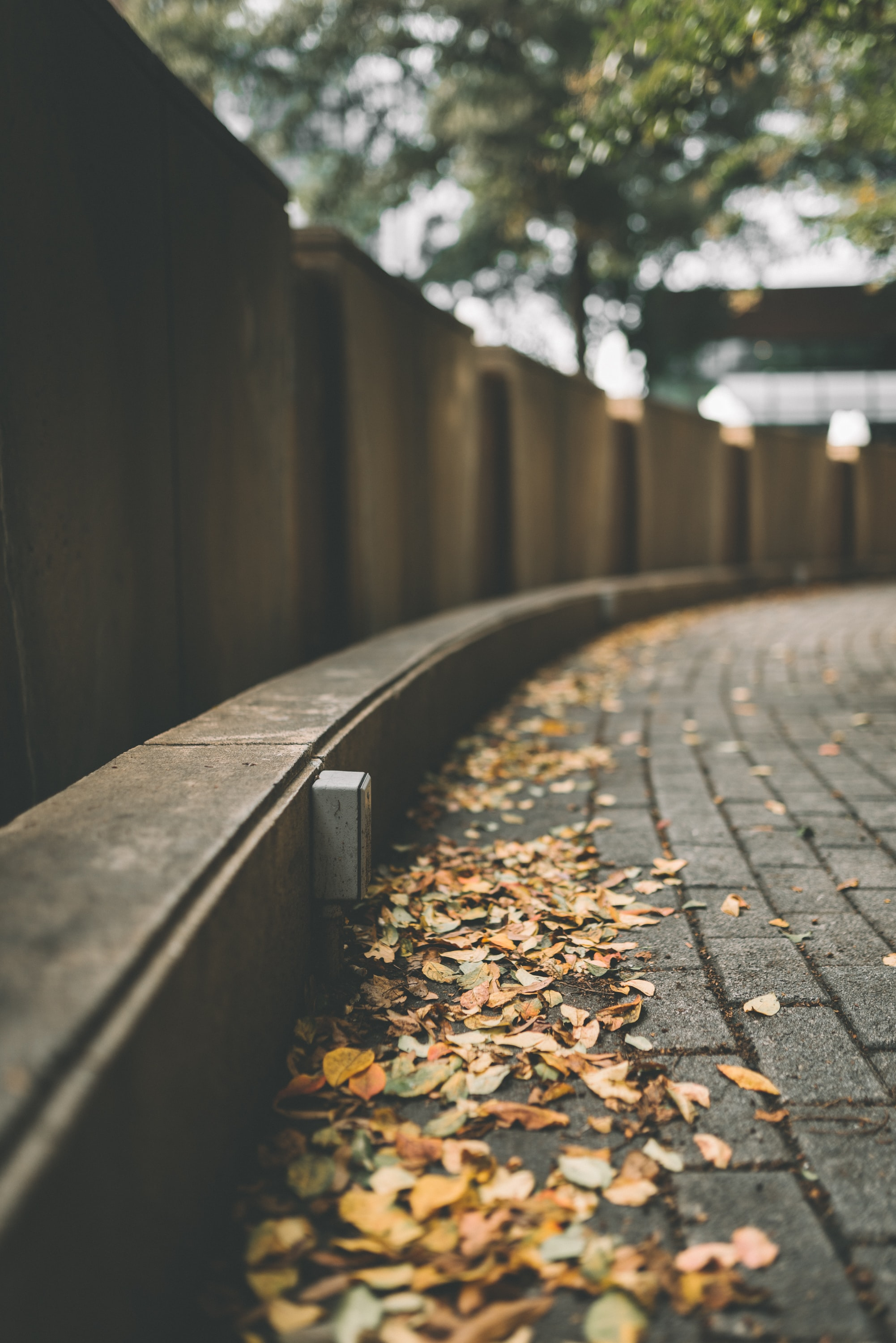 selective focus photo of brown leaves on concrete paving