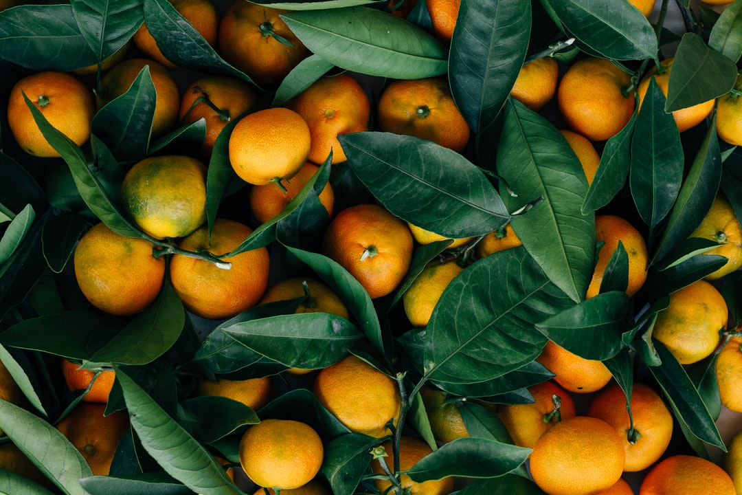 During autumn, the citruses become ripe and begin to fall from the trees. I climbed on a roof nearby to collect a few sacks full of mandarins. We shared the harvest with out neighbors and friends.
