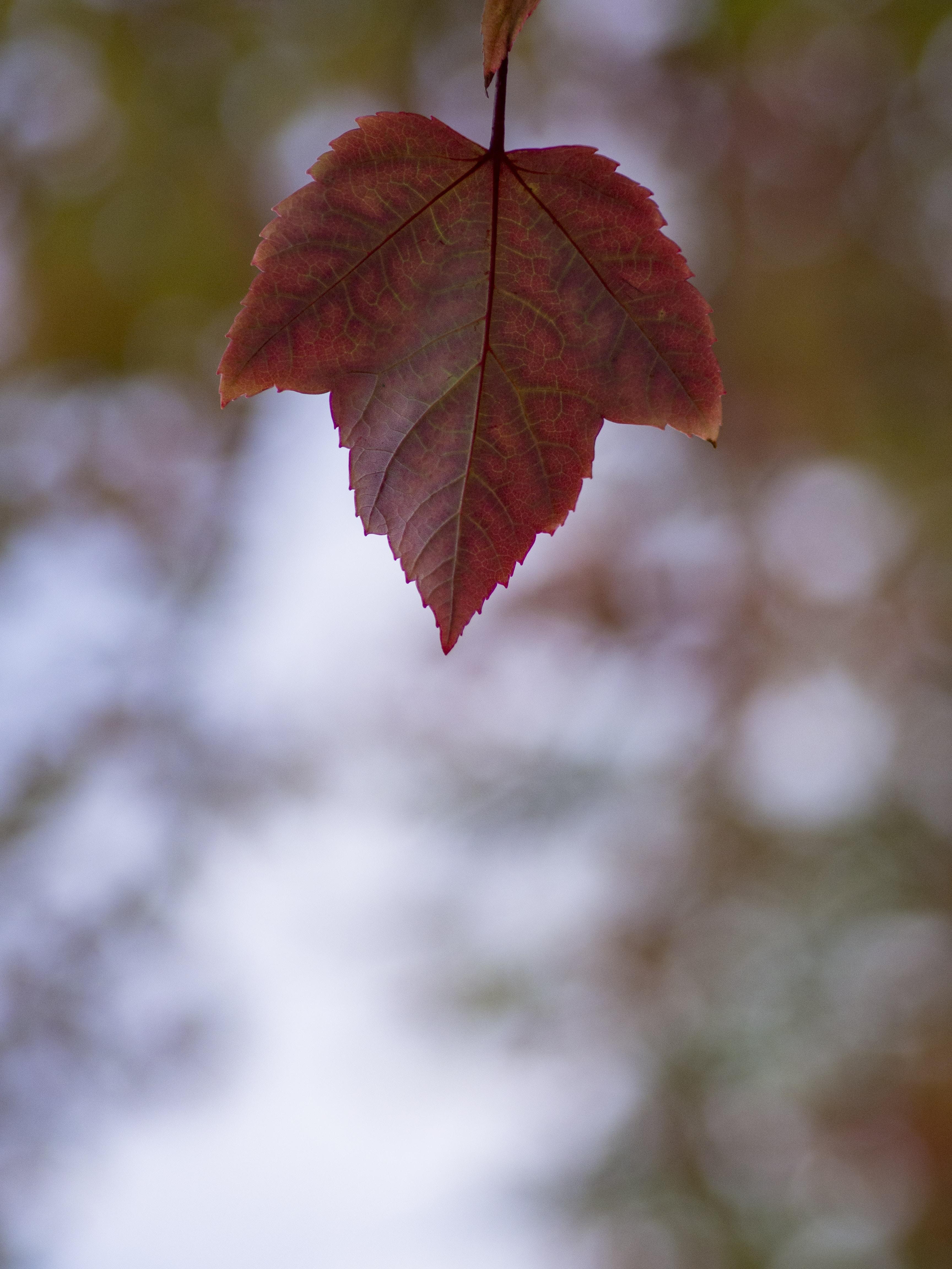 oak leave (ing) stories
