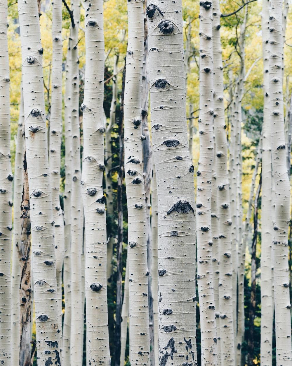 landscape photo of gray tree