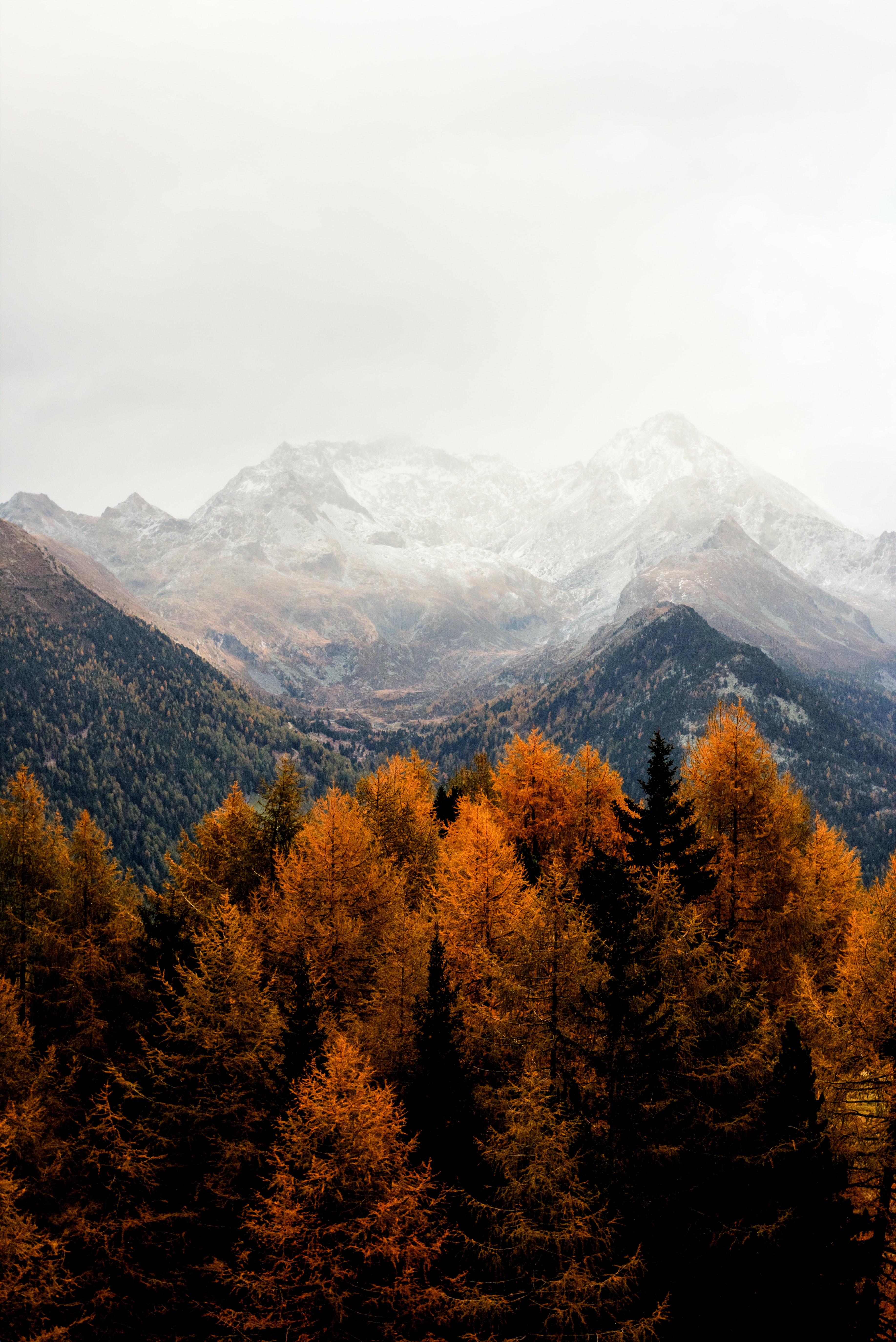 bare tress and mountain