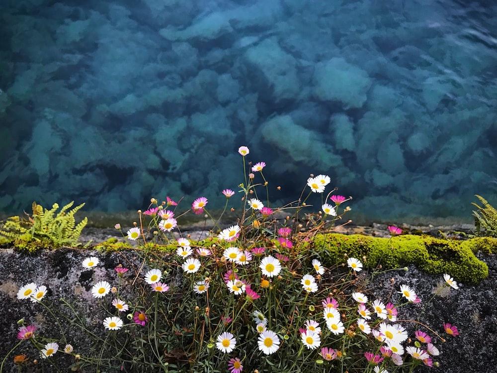 white petaled flowers near sea