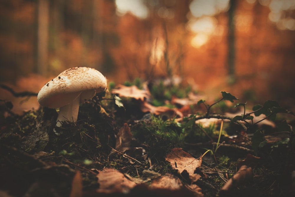 white mushroom near green grass closeup photography