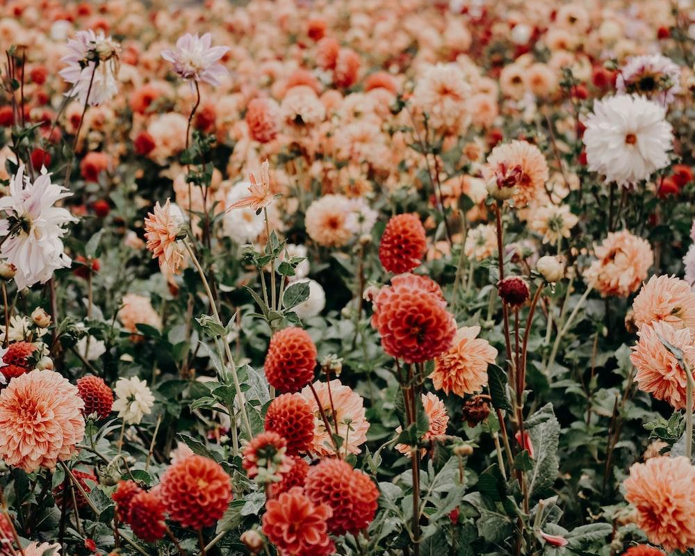 Flower, field, garden and bloom HD photo by Jacalyn Beales ...