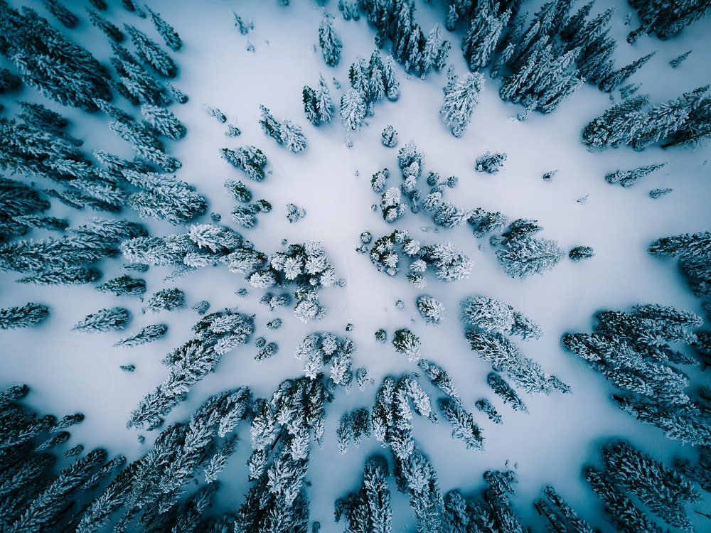 aerial view of snow covered pine trees