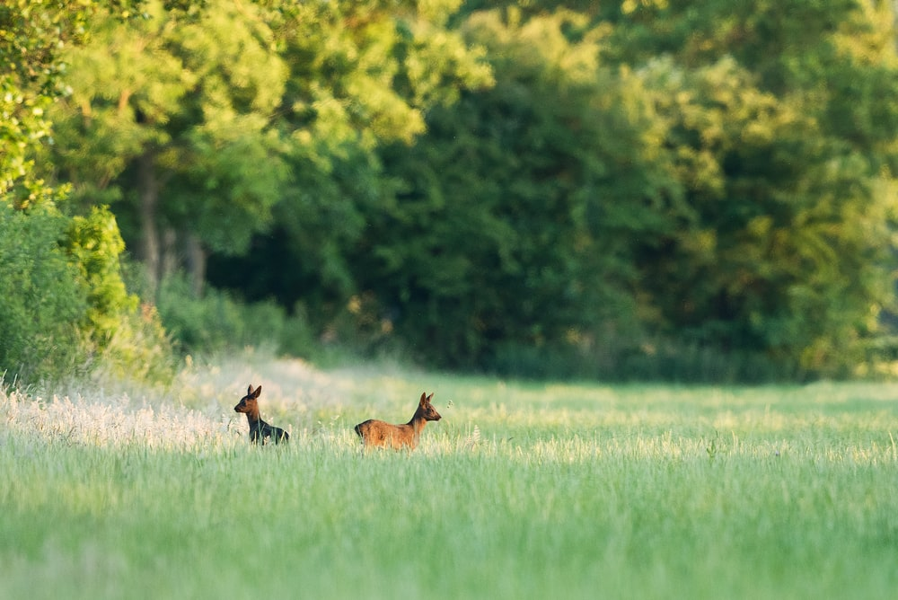 two deer on green field during daytime