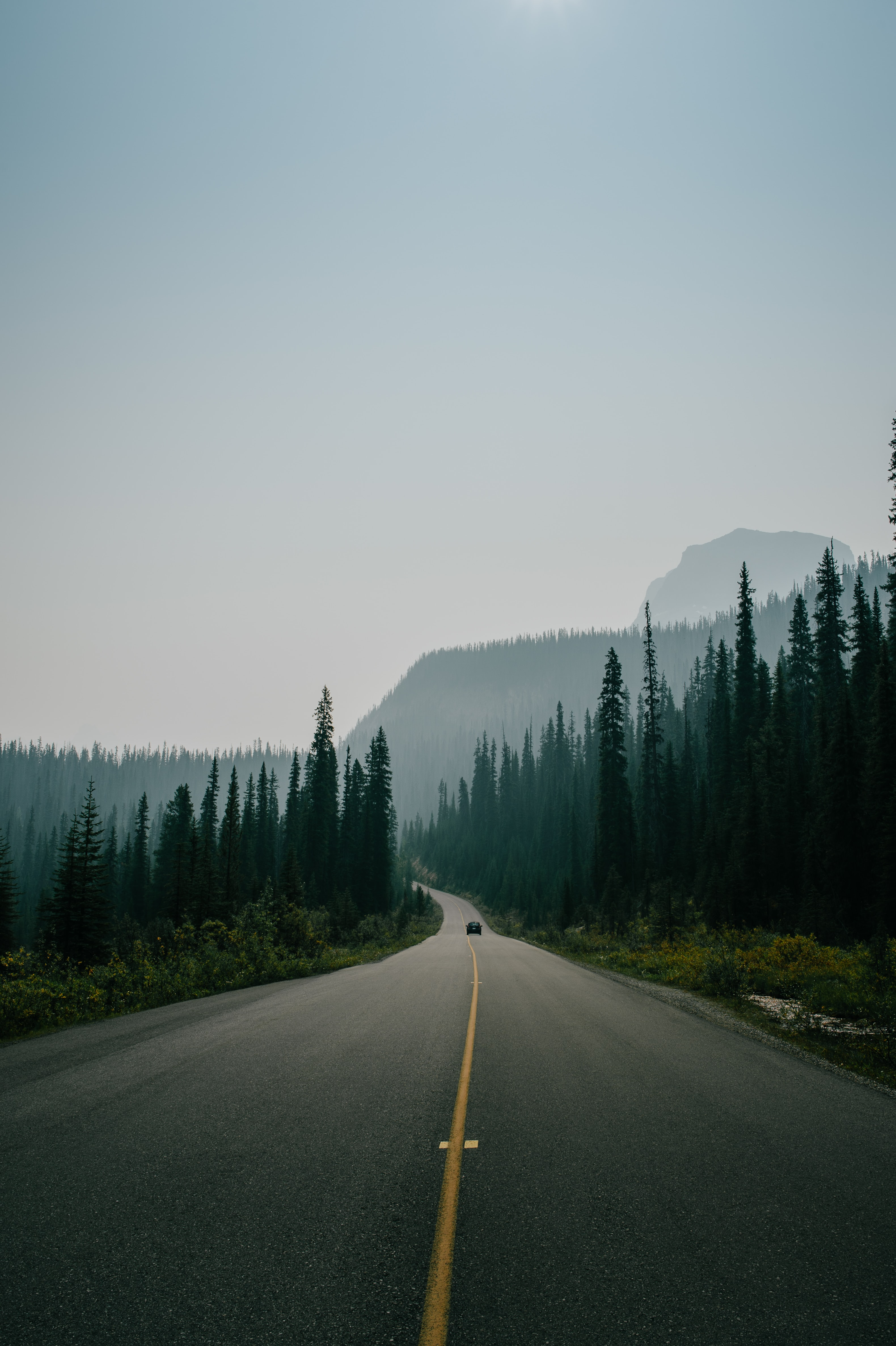 asphalt road surrounded by trees under skies