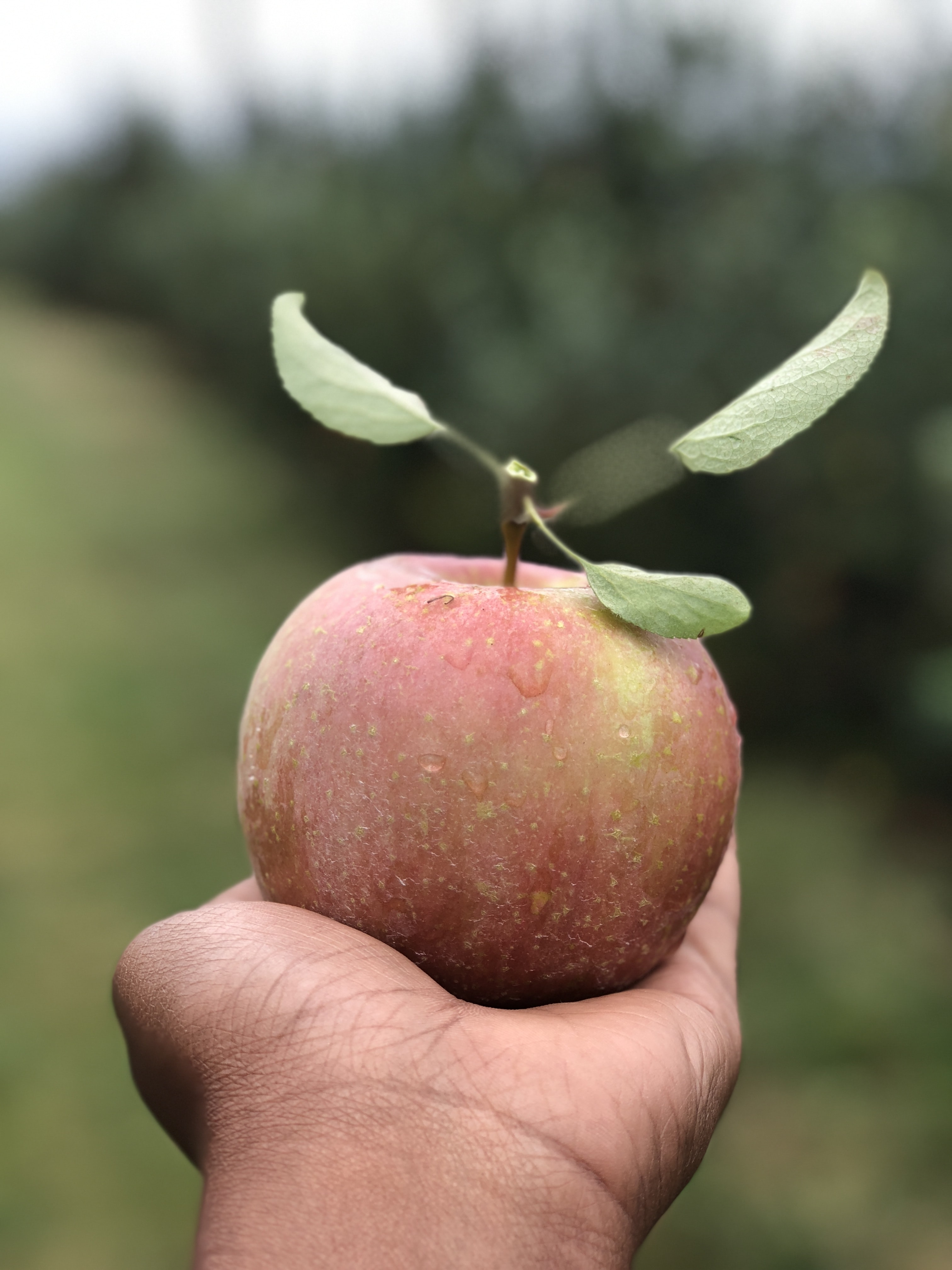 selective focus photography of person holding apple fruit