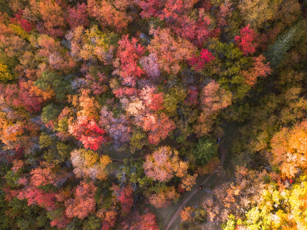 aerial photography of multicolored flower trees