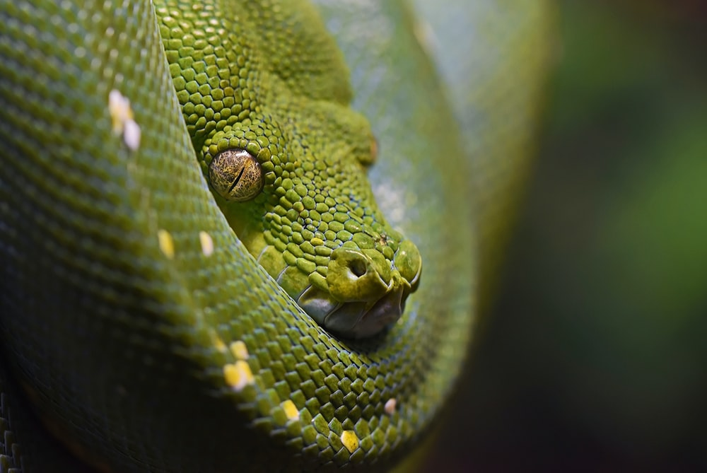 closeup photography green snake