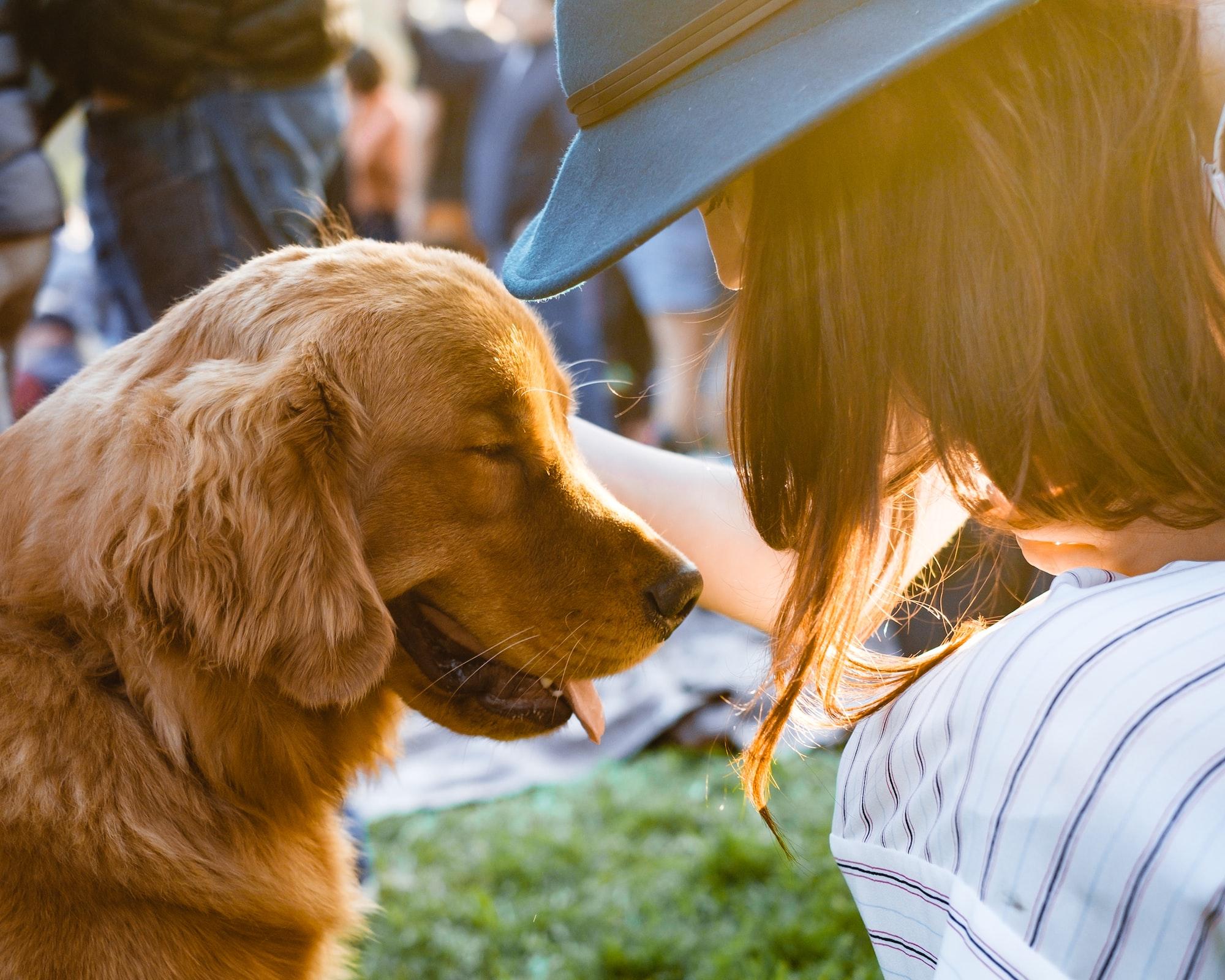 Si può essere allergici ai cani?